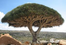 Socotra Island Photo Internet