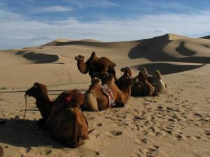 Gobi Desert Photo Vincent Tepas 2009