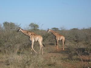 Kruger NP Photo Sjoerd Stolk 2007