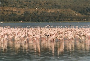Lake Nakuru NP Photo Hennie Sluimer 2004