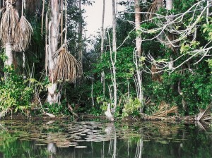 Madre de Dios River Photo Hennie Sluimer 2005