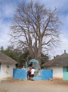 Baobab tree Photo Ed Sluimer 2006