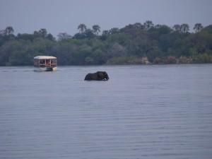 Zambezi River Photo Hennie Sluimer 2011